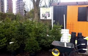 Duurzaam Sanans: Adopteer een Kerstboom!